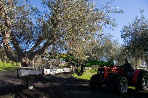 Azienda Olearia Agricor (36)