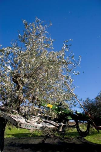 Azienda Olearia Agricor (37)